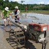 Rice planting - plough to level paddy